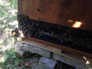 BienenKistenÜberfall_1