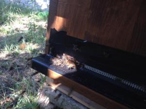 BienenKistenÜberfall_2