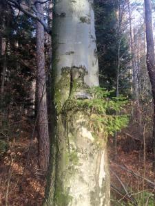 Baum_in_Baum