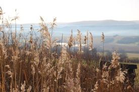 Schilf in der Sonne_Blick auf die Teichwiesen